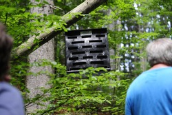 a pheromone trap for trees affected by a pest infestation