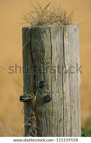 a photo an old fence post
