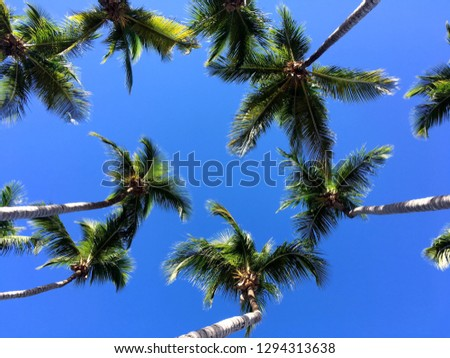 A photo looking up through palm trees to a clear blue sky in the summer.