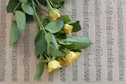 A photo of a bouquet of tender yellow roses with green leaves on a page of vintage styled sheet music, a postcard template with a place for text