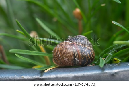 A photo of a brown snail