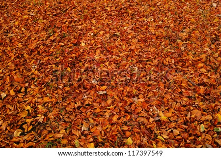 A photo of a carpet of autumn leaves