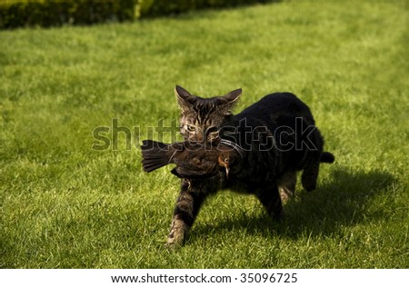 A photo of a cat which catches a bird