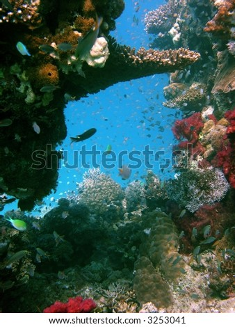 A photo of a coral reef stock photo
