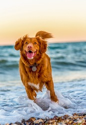 A photo of a dog playing in the water on the beach.