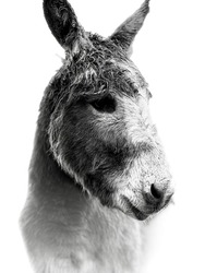 A photo of a donkey out in stormy weather in Wicklow, Ireland.