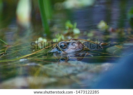 A photo of a frog