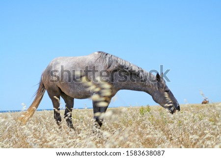 A photo of a horse #1583638087
