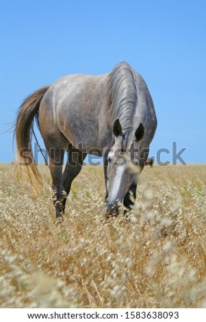 A photo of a horse #1583638093