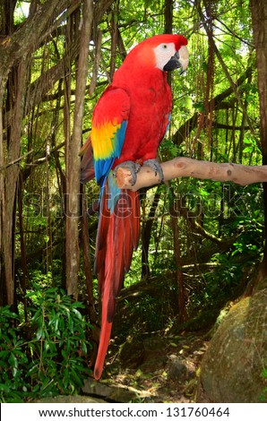 A photo of a macaw parrot perched in a branch in the tropical jungle.