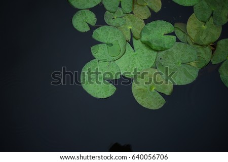 A photo of a pattern of lily pad floating, growing and expand all over the water pond.