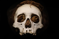 A photo of a scull with a black background