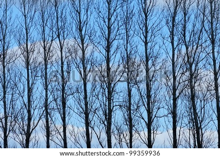 A photo of a silhouette of trees and blue sky with clouds