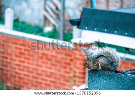 a photo of a squirrel sitting on the edge of balcony .