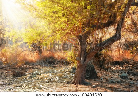 A photo of African wilderness - stock photo