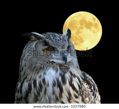 A photo of an owl