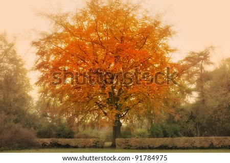 A  photo of Autumn forest and sun