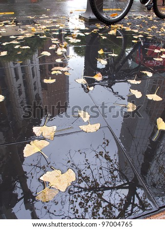 A photo of Autumn leaves in the city a rainy day