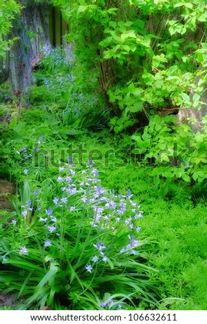 A photo of blue flowers and garden wilderness