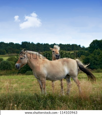 A photo of brown horses