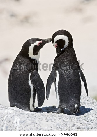 A photo of caring penguins (very sharp and detailed)