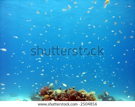 A photo of coral and lots of fish