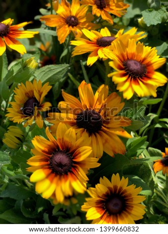 A photo of flowers closeup at the park #1399660832