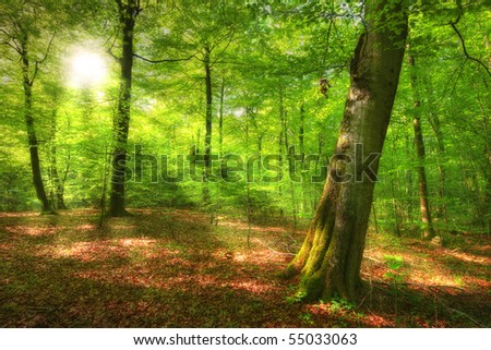 A photo of Forest beauty in lush green - springtime
