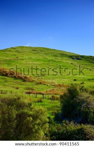 A photo of green hills in New Zealand (North)