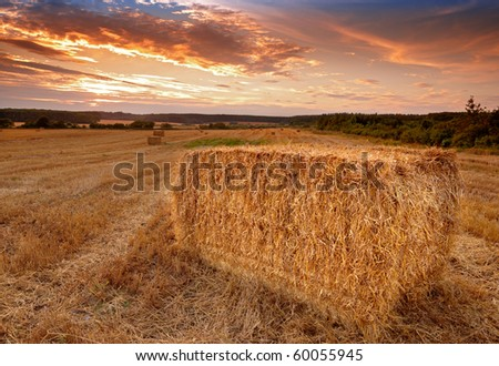 A photo of harvest sunset at the countryside