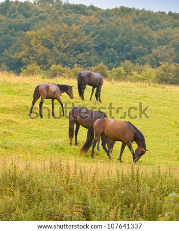 A photo of horses in the field