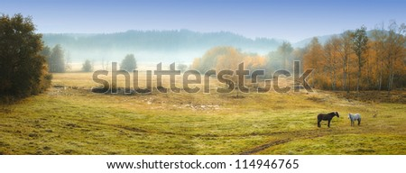 A photo of horses on a field in autumn colors