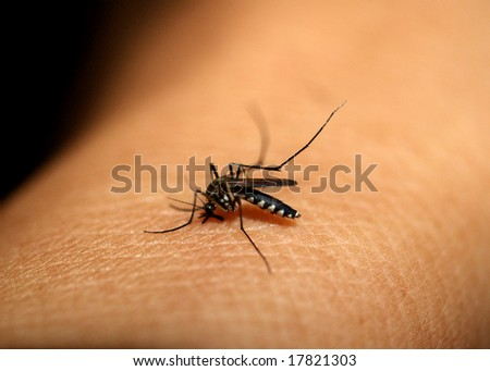 a photo of  mosquito  sucking blood on man skin