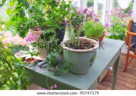 A photo of Plants, flowers and flowerpots - stock photo