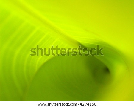 a  photo  of  season of  Banana leaves and drop water  / Banana leaves  background