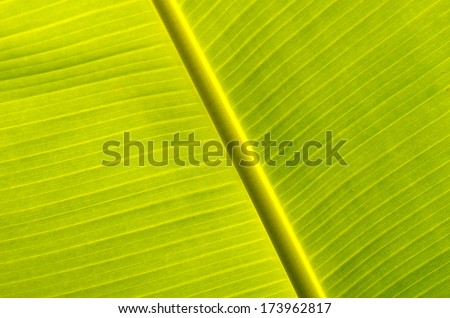 A photo of season of Banana leaves, Banana leaves.