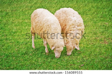 a photo of sheep in green field farm,texture technical