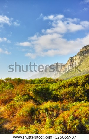a photo of South African wilderness