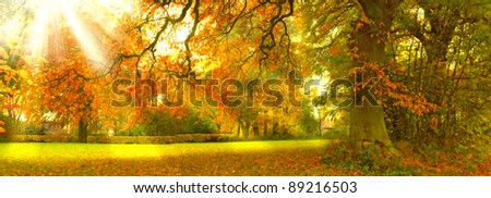 A  photo of Sunrise in autumn forest