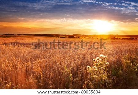 A photo of Sunset at the countryside, denmark - time for harvest