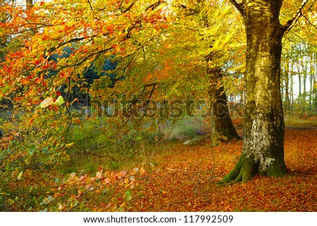 A photo of the colors of autumn forest