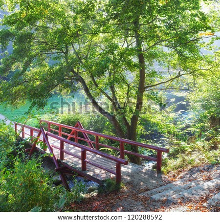 A photo of the forest in early spring - stock photo
