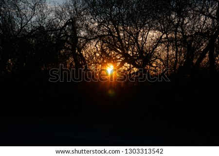 A photo of the sun rising through some trees. Shot around 7am at Coyote Hill in Fremont California