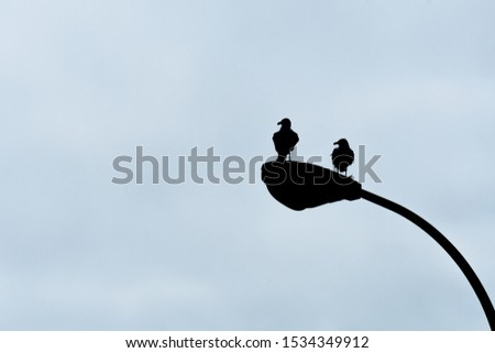 A photo of two seagulls perched on a lamppost