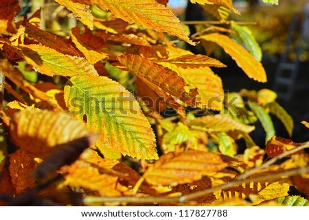 A photo of yellow leaves in autumn