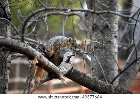 A photograph of a squirrel resting on a tree branch.
