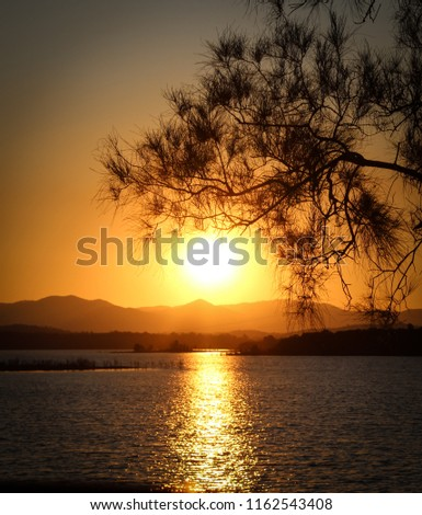 A photograph of a tree's silhouette in front of the sun as it was setting over the North Pine Dam. This photo was taken in Brisbane, Australia.