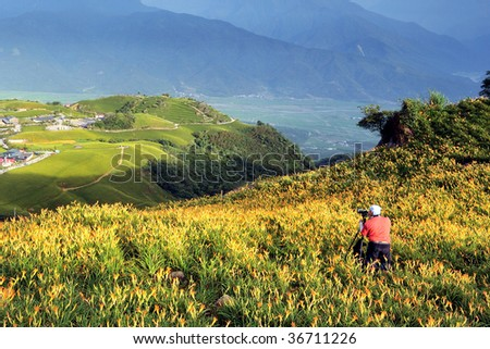 a photographer in Lily field on a hill - stock photo