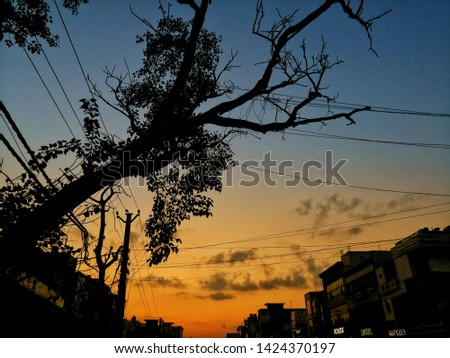 A pic of a tree during sunset.