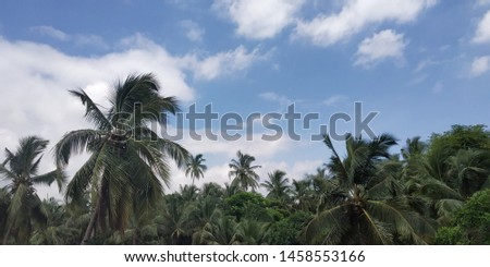 A pic which resembles how beautiful nature is.The pic includes coconut trees and a bright blue sky.